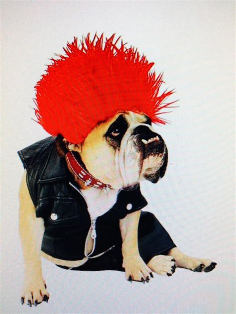 do you dress your pet for halloween we don t