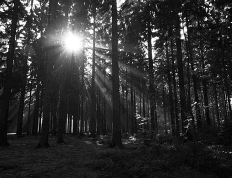 Forest Light GIFs - Find & Share on GIPHY