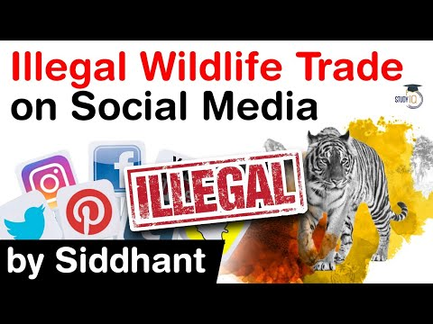 EU parliament must act to stop illegal trade in wild
