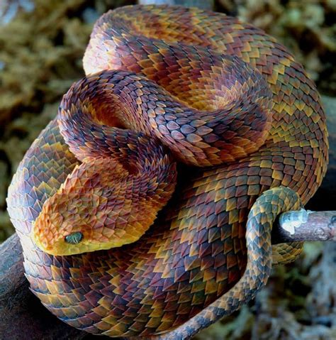 The Most Gorgeous Snake Species In The World